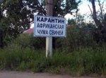 В Запорожской области ликвидируют очаг африканской чумы свиней