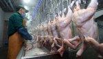 Украина решила накормить курятиной весь Китай