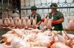 Россия заблокировала поставки крупнейшего в Украине производителя мяса птицы