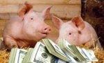 Украинское свиноводство является привлекательным для китайских инвесторов — мнение