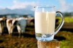 В Запорожской области выросло производство мяса и молока