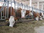 Минагропрод предложил расширить поддержку строительства животноводческих комплексов